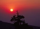 Sunrise at Patriarch Grove